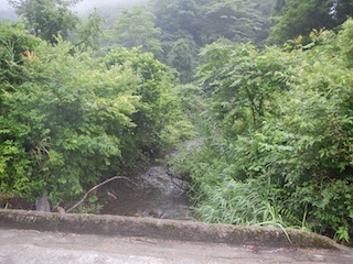 「樹林の山旅」の樹林を目指して…温見川支流赤谷_c0359615_22320128.jpg