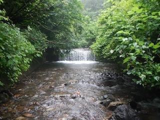「樹林の山旅」の樹林を目指して…温見川支流赤谷_c0359615_22321463.jpg
