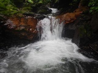 「樹林の山旅」の樹林を目指して…温見川支流赤谷_c0359615_22323120.jpg