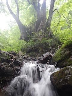 「樹林の山旅」の樹林を目指して…温見川支流赤谷_c0359615_22323765.jpg