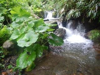 「樹林の山旅」の樹林を目指して…温見川支流赤谷_c0359615_22325672.jpg