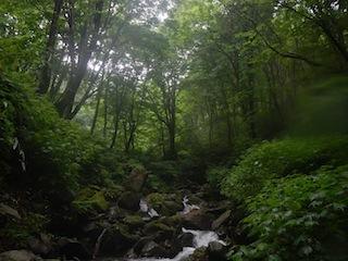 「樹林の山旅」の樹林を目指して…温見川支流赤谷_c0359615_22330724.jpg
