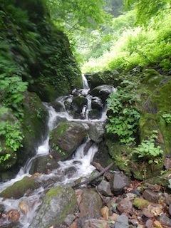 「樹林の山旅」の樹林を目指して…温見川支流赤谷_c0359615_22331200.jpg