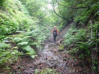 「樹林の山旅」の樹林を目指して…温見川支流赤谷_c0359615_22343576.jpg