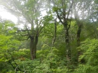 「樹林の山旅」の樹林を目指して…温見川支流赤谷_c0359615_22344812.jpg