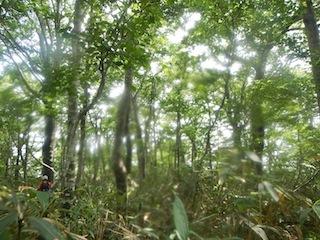 「樹林の山旅」の樹林を目指して…温見川支流赤谷_c0359615_22345771.jpg