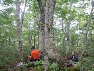 「樹林の山旅」の樹林を目指して…温見川支流赤谷_c0359615_22350507.jpg