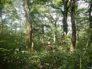 「樹林の山旅」の樹林を目指して…温見川支流赤谷_c0359615_22352020.jpg