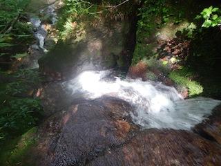 「樹林の山旅」の樹林を目指して…温見川支流赤谷_c0359615_22353529.jpg
