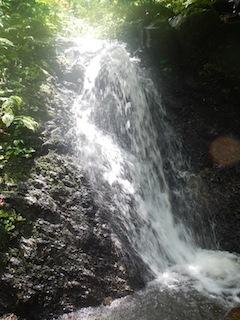 「樹林の山旅」の樹林を目指して…温見川支流赤谷_c0359615_22354752.jpg