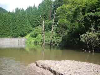 「樹林の山旅」の樹林を目指して…温見川支流赤谷_c0359615_22362841.jpg