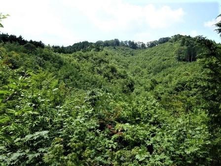 みんなの森活動日記_d0105723_18465637.jpg