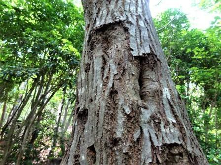 みんなの森活動日記_d0105723_18470856.jpg