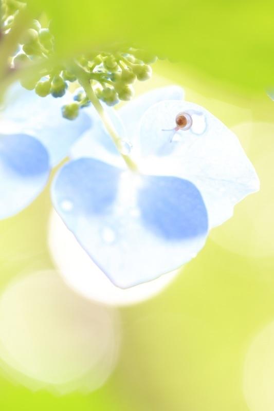 「美しいあじさい&初夏のイメージショットを撮ってみた!」キャンペーン結果発表(その②)_f0357923_02361529.jpg
