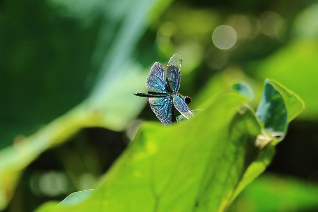 蝶とトンボ_e0403850_21594742.jpg