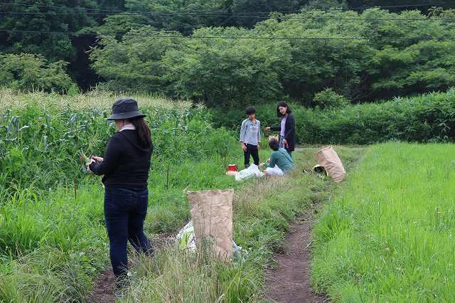 7月28日 ひるぜん農園 無料トウモロコシ狩り_f0340155_15263073.jpg