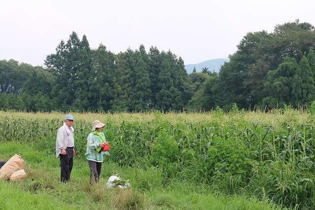 7月28日 ひるぜん農園 無料トウモロコシ狩り_f0340155_15264712.jpg