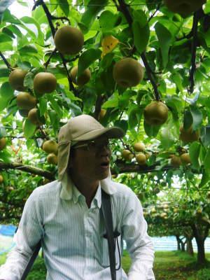 熊本梨 こだわりの樹上完熟梨『幸水』昨日より出荷スタートしました!初収穫の様子を現地取材!_a0254656_17575630.jpg