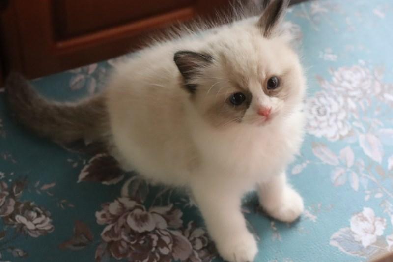 今日の子猫達  カー君多め_a0285571_21511296.jpg