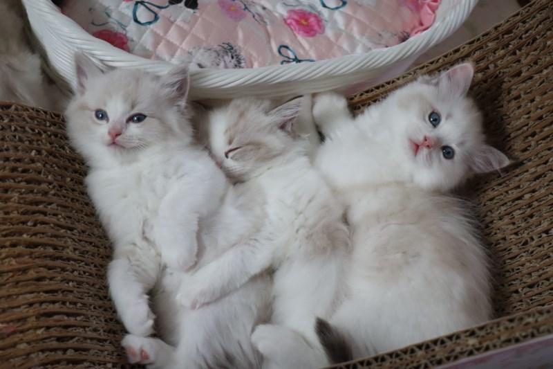 今日の子猫達  カー君多め_a0285571_21511829.jpg