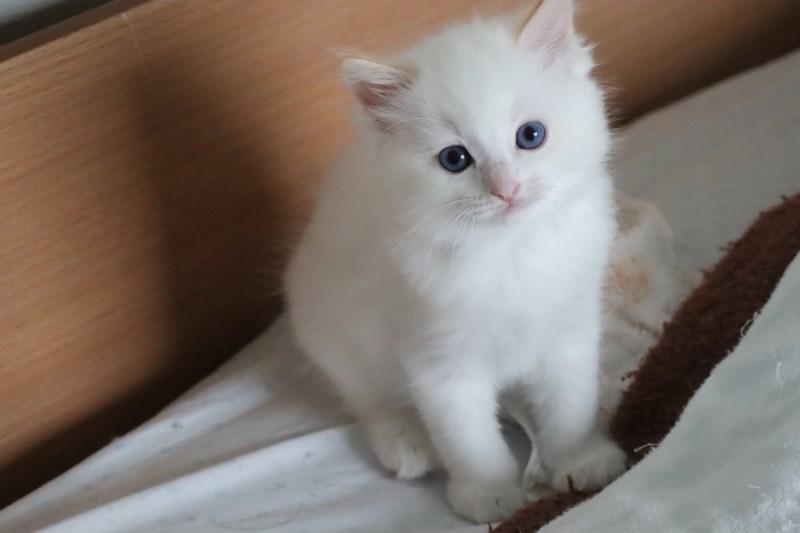 今日の子猫達  カー君多め_a0285571_21513344.jpg