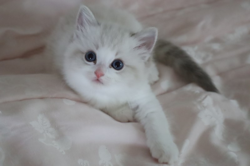 今日の子猫達  カー君多め_a0285571_21513934.jpg