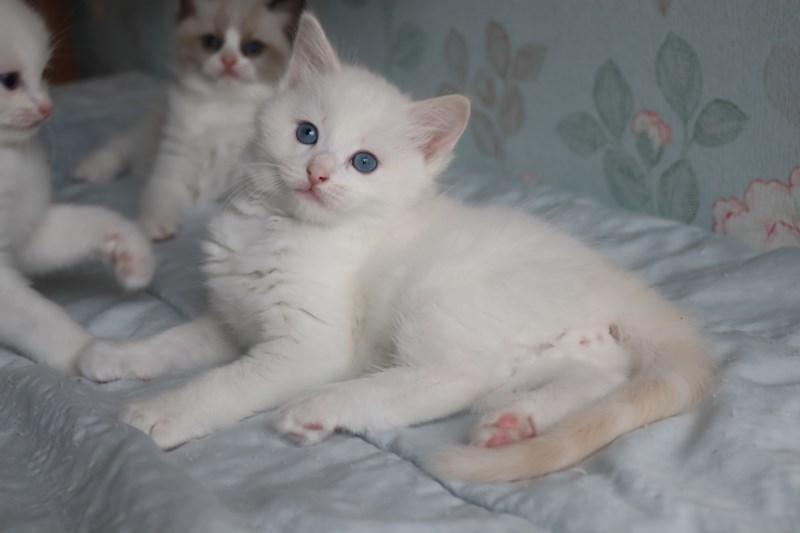 今日の子猫達  カー君多め_a0285571_21514660.jpg