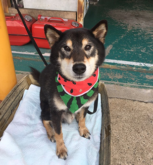 タッキーと、アノ犬_b0057675_10244908.jpg