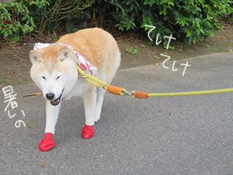 タッキーと、アノ犬_b0057675_10320088.jpg