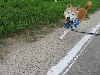 タッキーと、アノ犬_b0057675_10452468.jpg