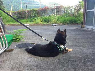 タッキーと、アノ犬_b0057675_10562656.jpg