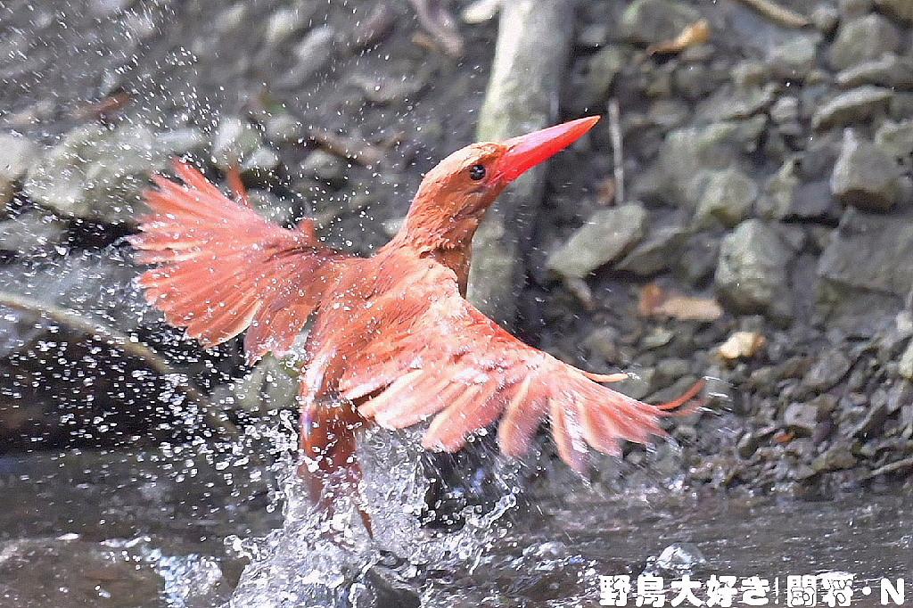 水浴び_f0059882_5334273.jpg