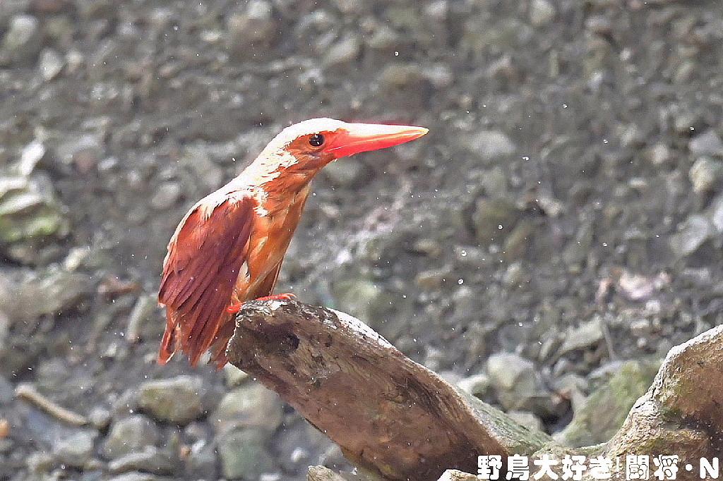 水浴び_f0059882_5343238.jpg