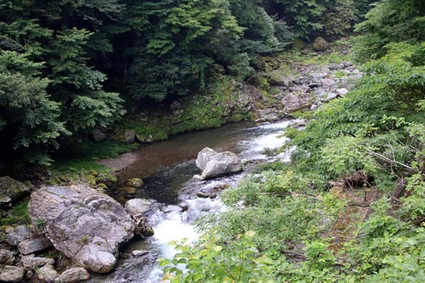 北山友禅菊が満開 久多の山里_e0048413_21524987.jpg