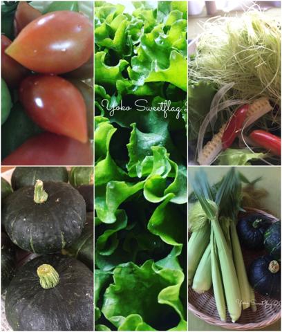酷暑のなかでも野菜達は頑張ってる_d0049817_11483461.jpg