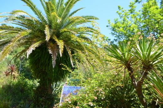 「モネの庭20周年に向けて」と「光の庭」工事の様子_e0135518_17153812.jpg