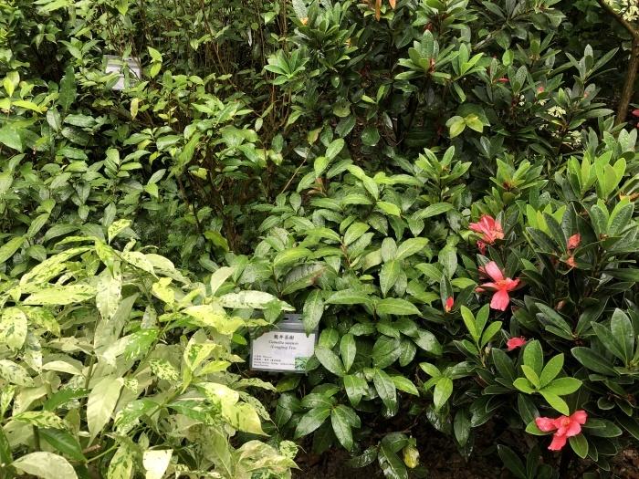 お茶の葉の違いを知る@香港公園_a0169924_20480184.jpeg