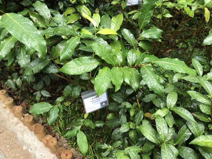 お茶の葉の違いを知る@香港公園_a0169924_20481506.jpeg