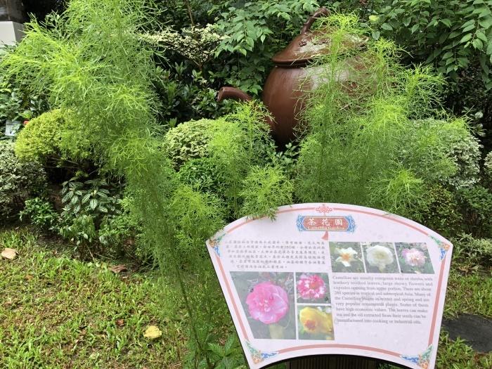 お茶の葉の違いを知る@香港公園_a0169924_20490106.jpeg
