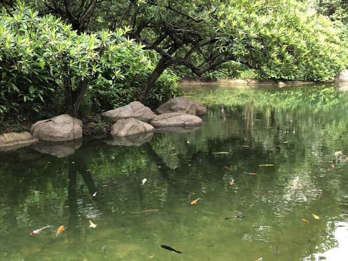 お茶の葉の違いを知る@香港公園_a0169924_20495948.jpeg