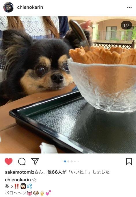 かりんちゃん「Instagram」で会いましょう♪_c0192724_11175015.jpg
