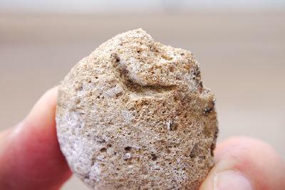 石を齧る魚_c0019338_11355185.jpg