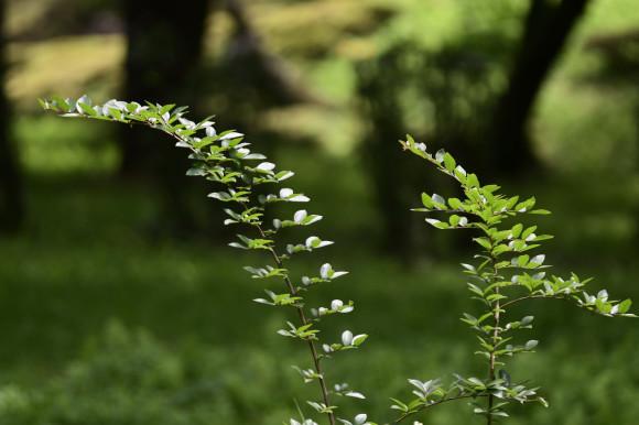 樹木公園にて_c0093046_17350954.jpg