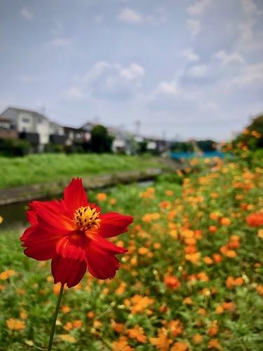 花咲ツアー2019 〜徳島編〜_e0071652_12444406.jpeg