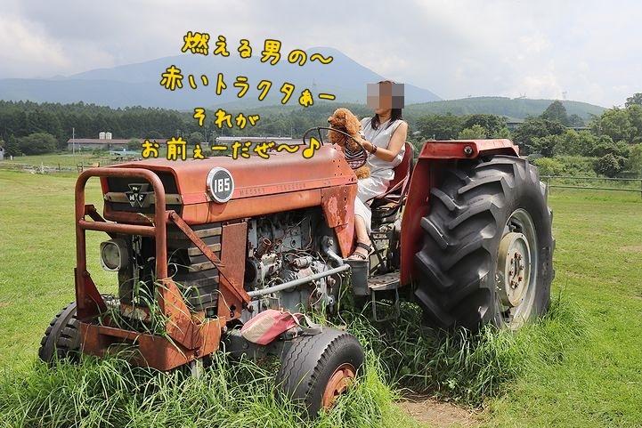 ④牧場ならでは、だね。_b0111376_14422332.jpg