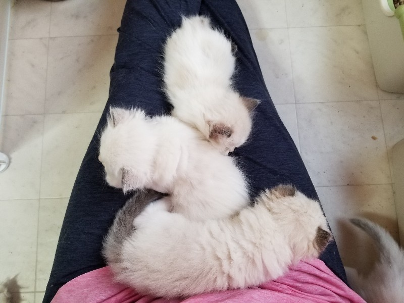 眠くてもお返事してくれるよ♪ &今日の子猫_a0188883_22154788.jpg