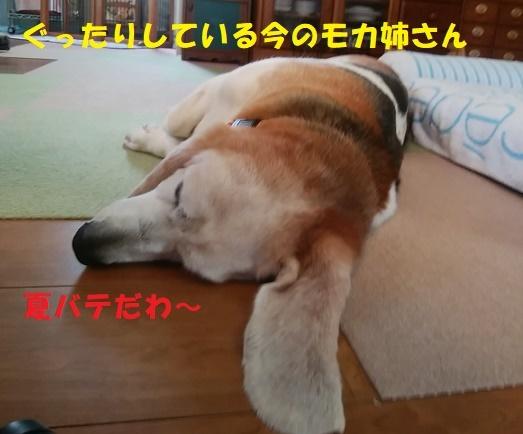 f0121712_15465501.jpg