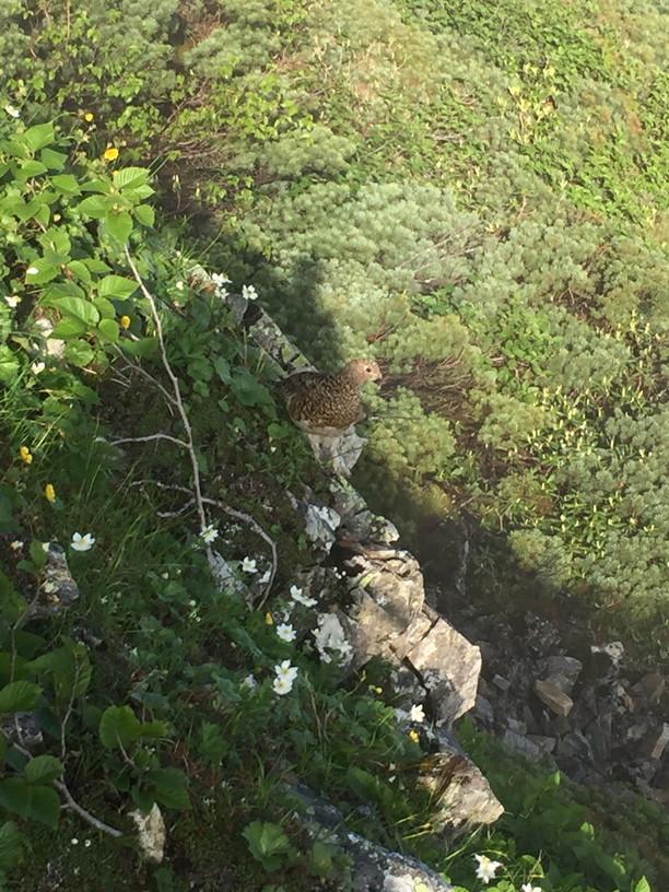 """2019年7月『天空が友達 -北アルプス後立山連峰縦走-』July 2019 \""""On the Skyline, Trekking of North Japan Alps\""""_c0219616_11355159.jpg"""