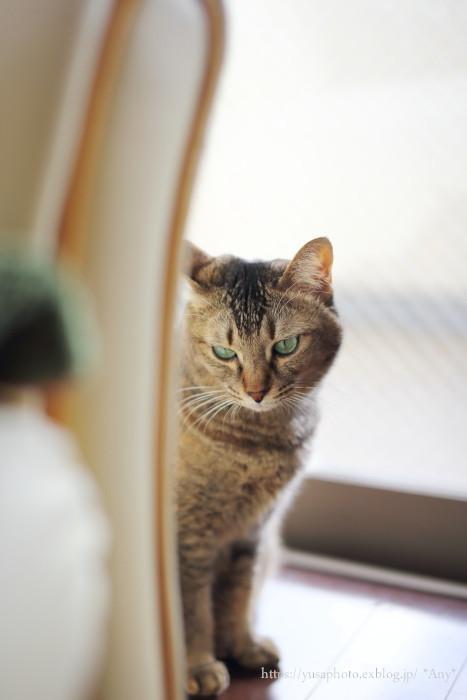 猫がいる暮らし - 22 -_e0347431_17171280.jpg