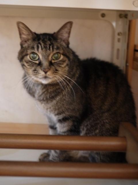 猫のお留守番 リーくん編。_a0143140_20402844.jpg